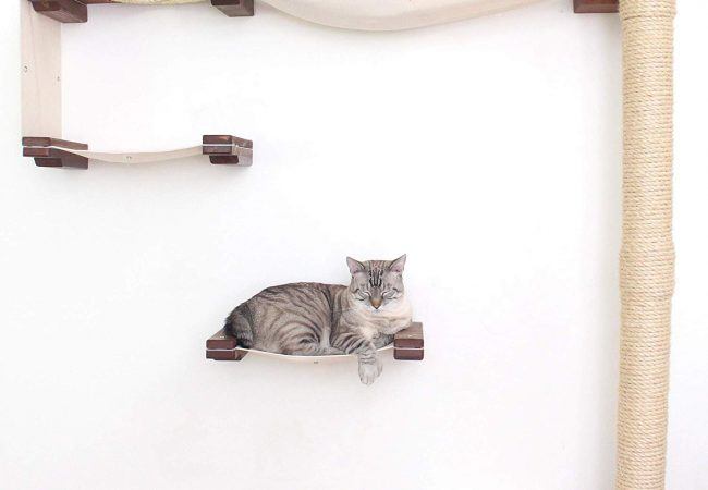 CatastrophiCreations Cat Mod Climb Track Wall-Mounted Cat Tree Shelves Review