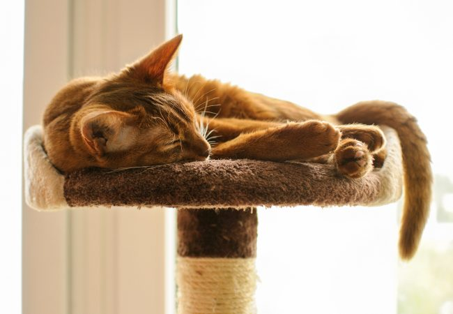 The Best Cat Trees For Your Large Cats – Guide, Reviews & Tips 2020 Edition