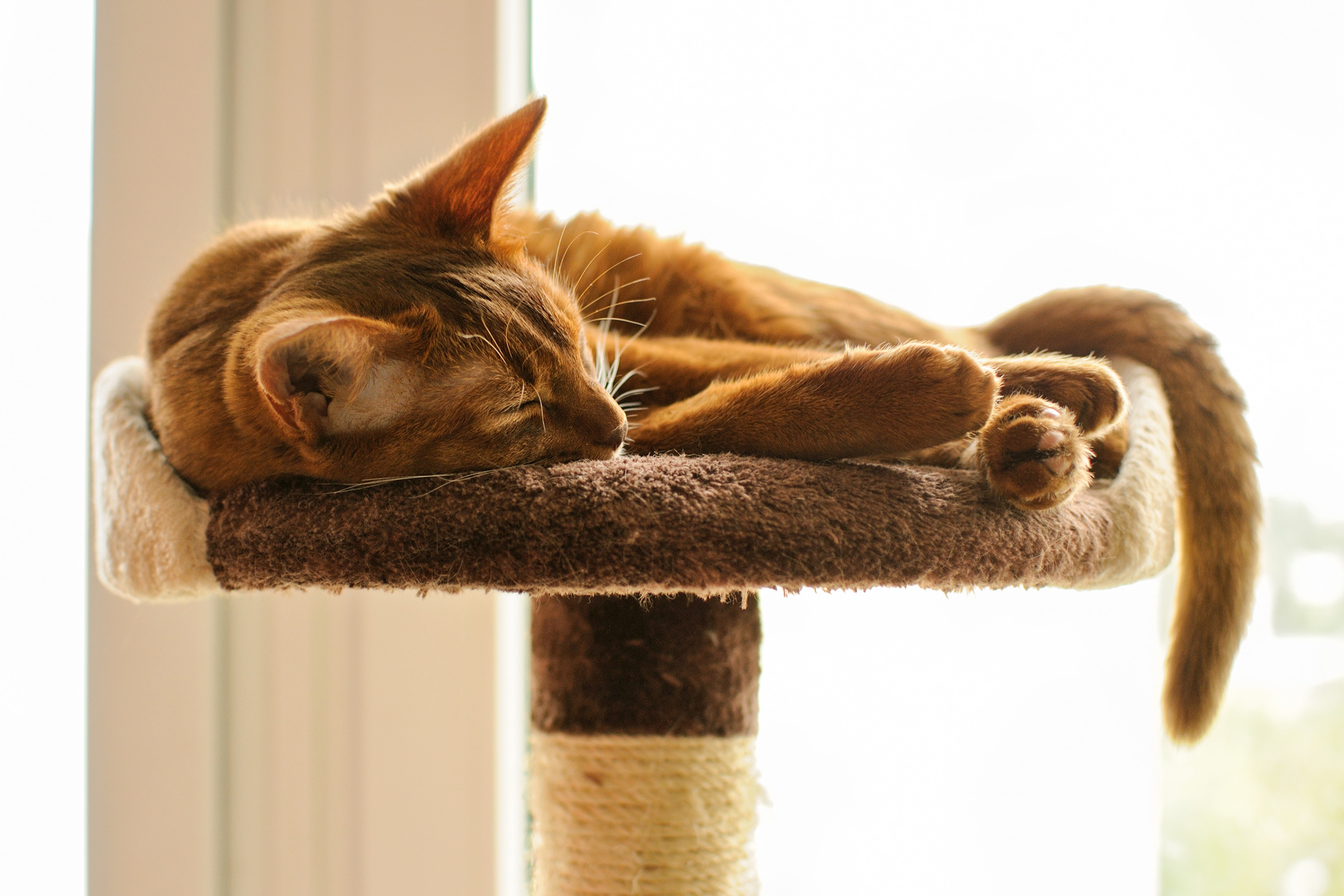 The Best Cat Trees For Your Large Cats -  Reviews And Tips