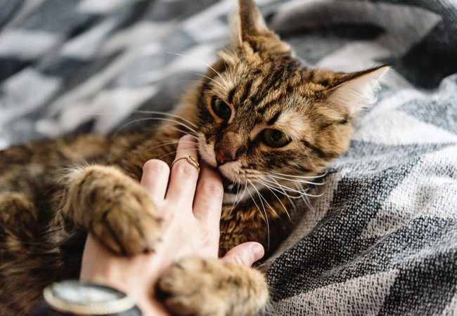 Do Cats Understand No: A Guide to Training Your New Cat