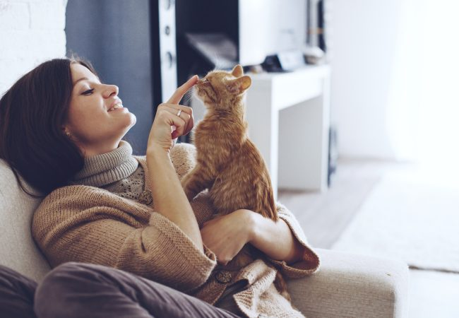 First Time Cat Owner Tips for a Happy Healthy Cat
