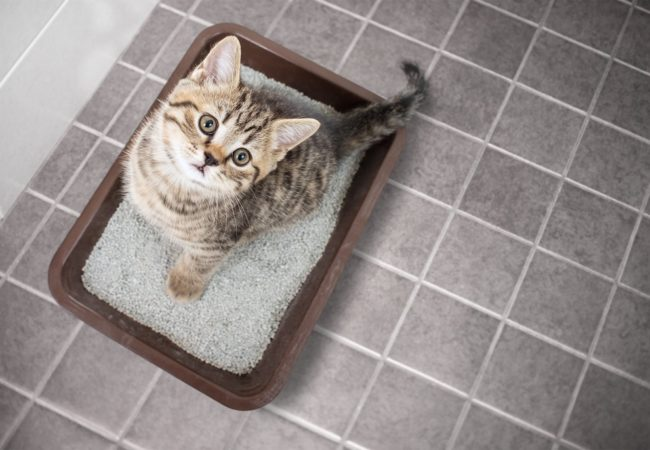 Best Cat Litter Box: Low Maintenance Litter Boxes Your Cats Will Love: 2020 Buyer's Guide