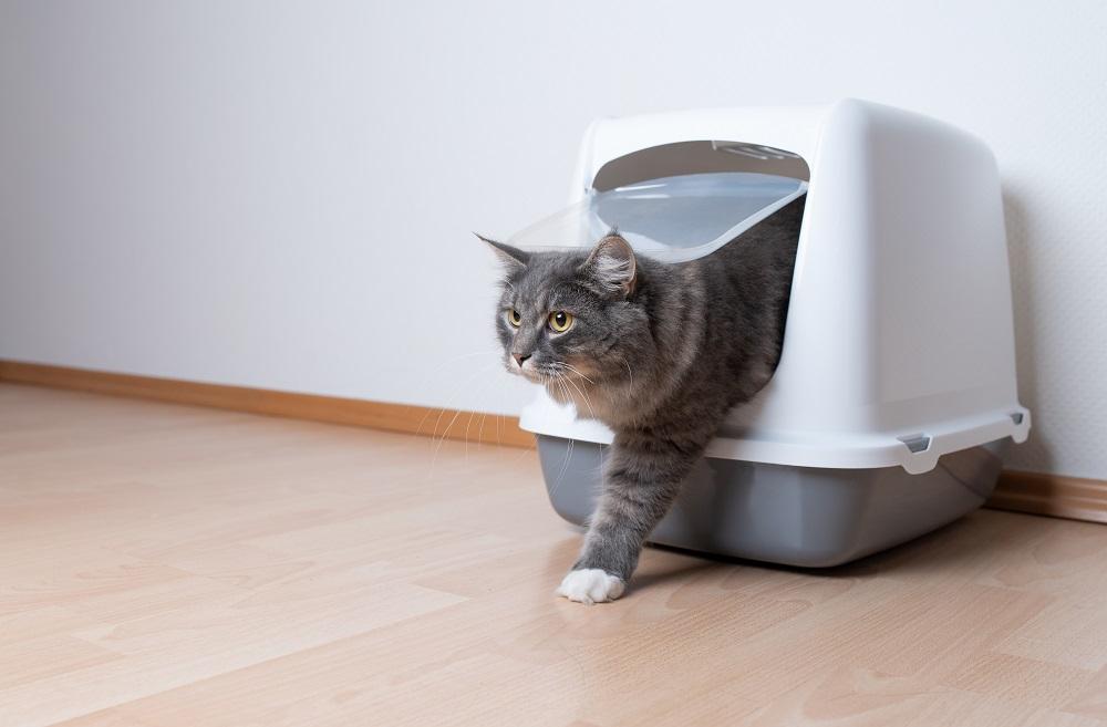 tubby cat
