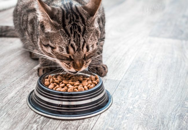 Best Dry Cat Food for Adults, Seniors, and Kittens: 2020 Buyer's Guide and Top Products