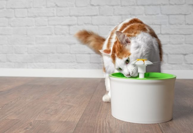 Best Cat Water Fountain: Epic Buyer's Guide for 2021 & Leading Products