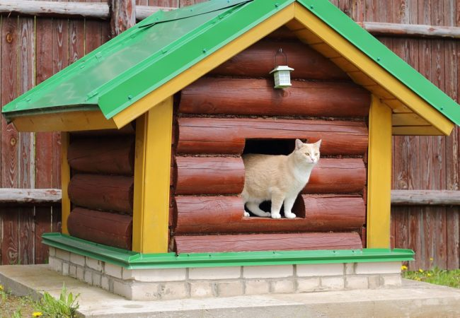 Best Outdoor Cat House: Leading Models & 2020 Buyer's Guide
