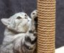 Best Cat Scratching Post: Buyer's Guide for 2020