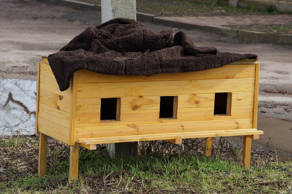 safe shelter for cats
