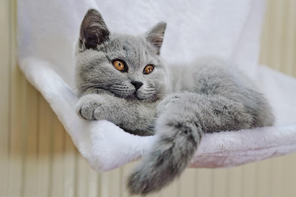 cat chilling