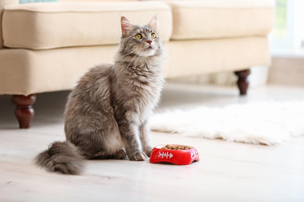 cute cat on the floor