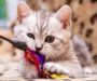 Best Cat Toys for Juvenile and Senior Cats: 2020 Buyer's Guide