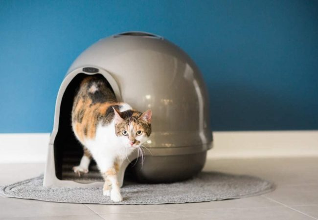 Best Dog Proof Litter Box in 2021: In-Depth Buyer's Guide