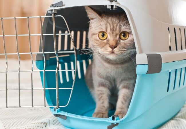 Best Cat Carriers for 2021: Complete Buyer's Guide