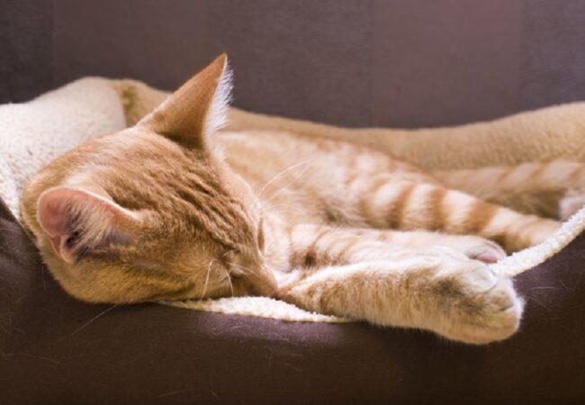 Best Heated Cat Beds for Indoor & Outdoor Use: 2021 Buyer's Guide