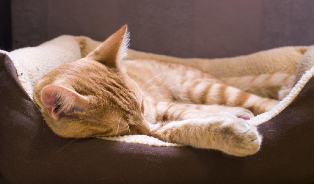 sleeping cat in cat bed