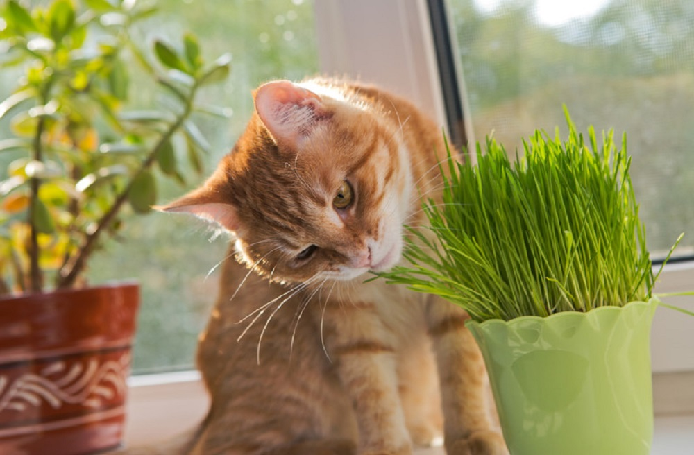 tabby cat and plant