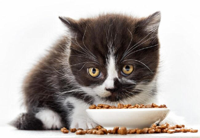 Best Cat Foods for Sensitive Stomach: 2021 Buyer's Guide