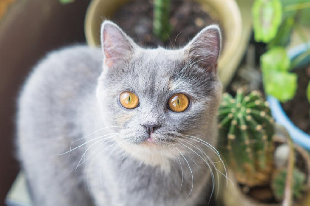 cat and cacti