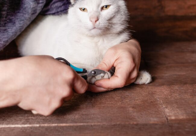 How to Cut Your Cat's Nails: A Guide to Indoor Cat Nail Care