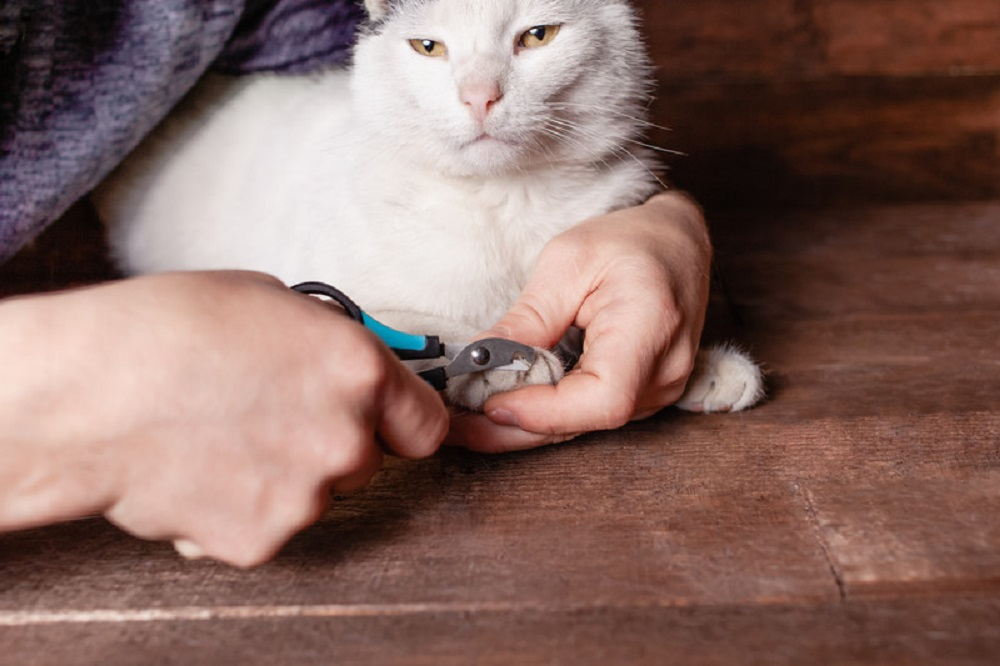 trimming cats nails