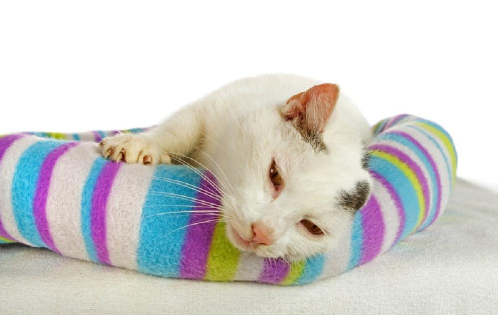 sleepy cat in cat bed