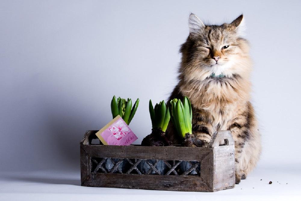 cat and plant portrait