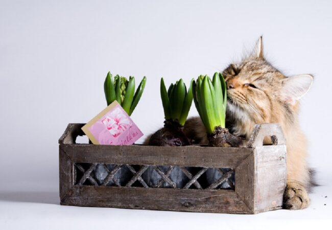 How to Keep Cats Out of Your House Plants