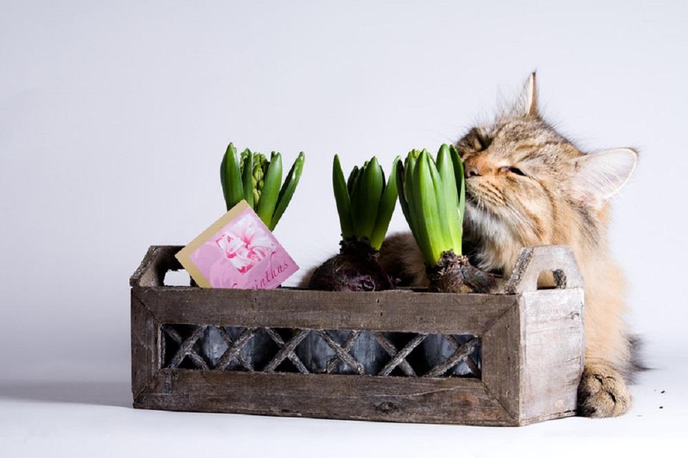 cat smelling plants