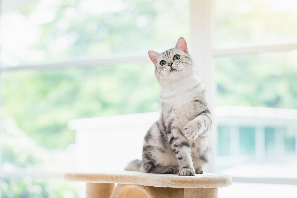 cat on top of a cat tree