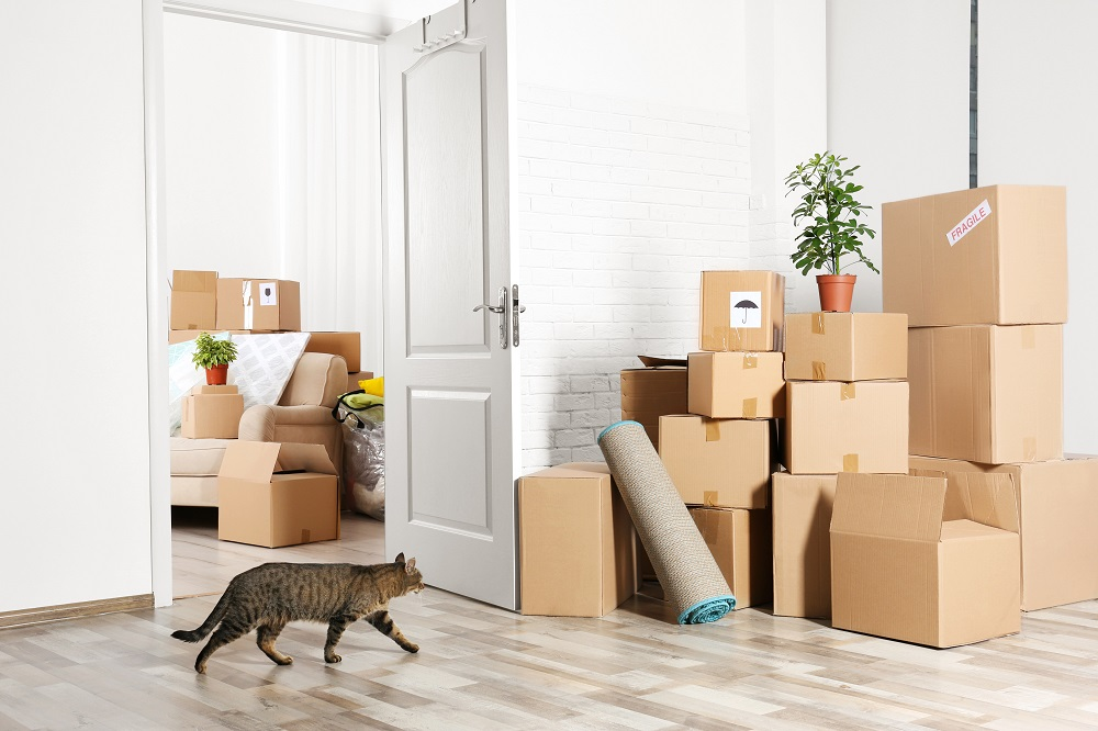 moving day with cat