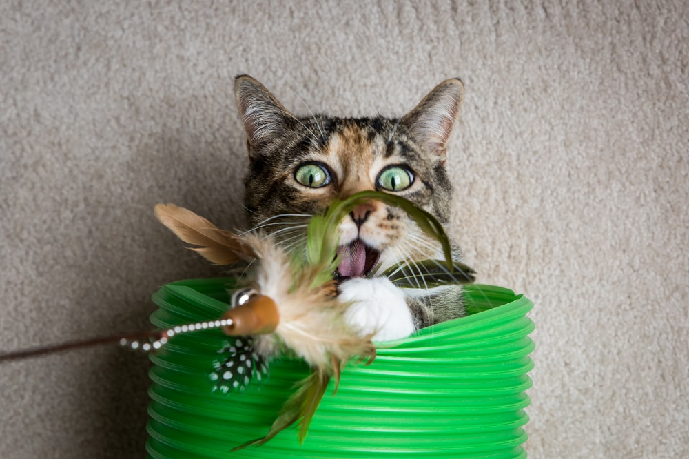 calico cat with toy