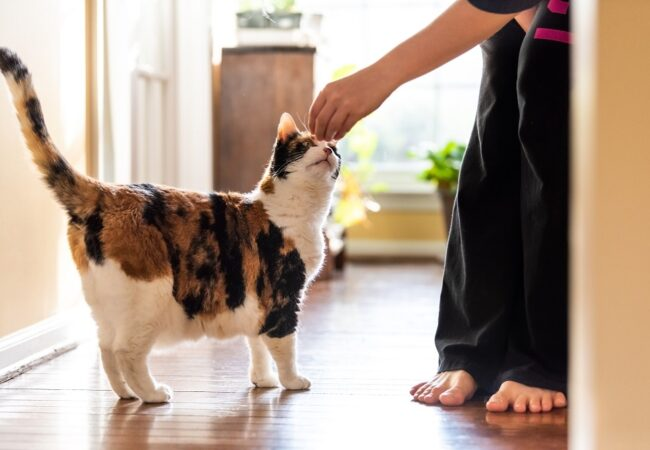 How to Train a Cat: Basic Training Techniques for New Pet Owners