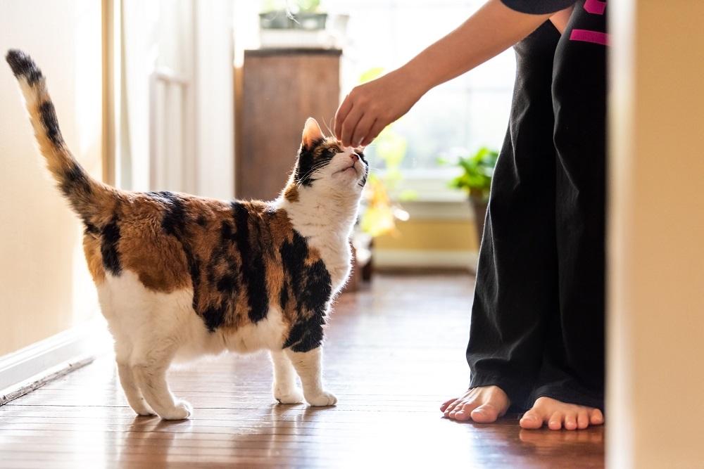 training a cat