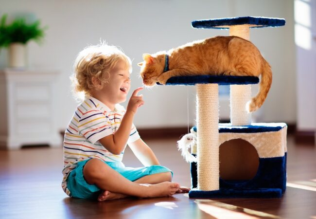 DIY Cat Tree for All Skill Levels