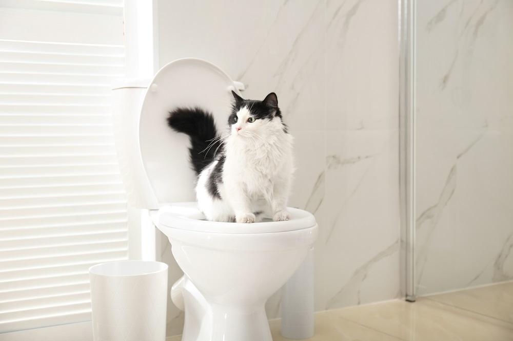 potty training a cat