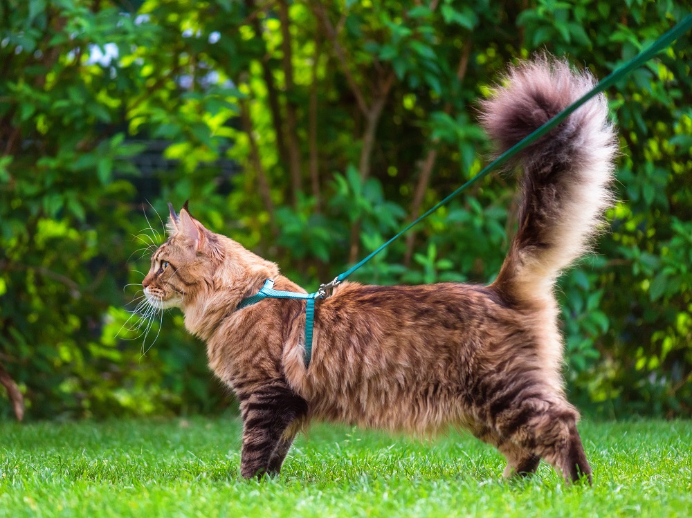 can in the best cat harness
