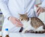 Best Flea Treatment for Cats in 2021: Fast Acting & Preventative Treatments