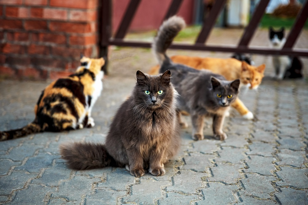 group of feral cats