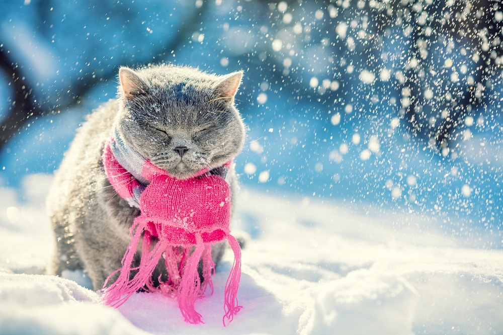 cat staying warn in the winter