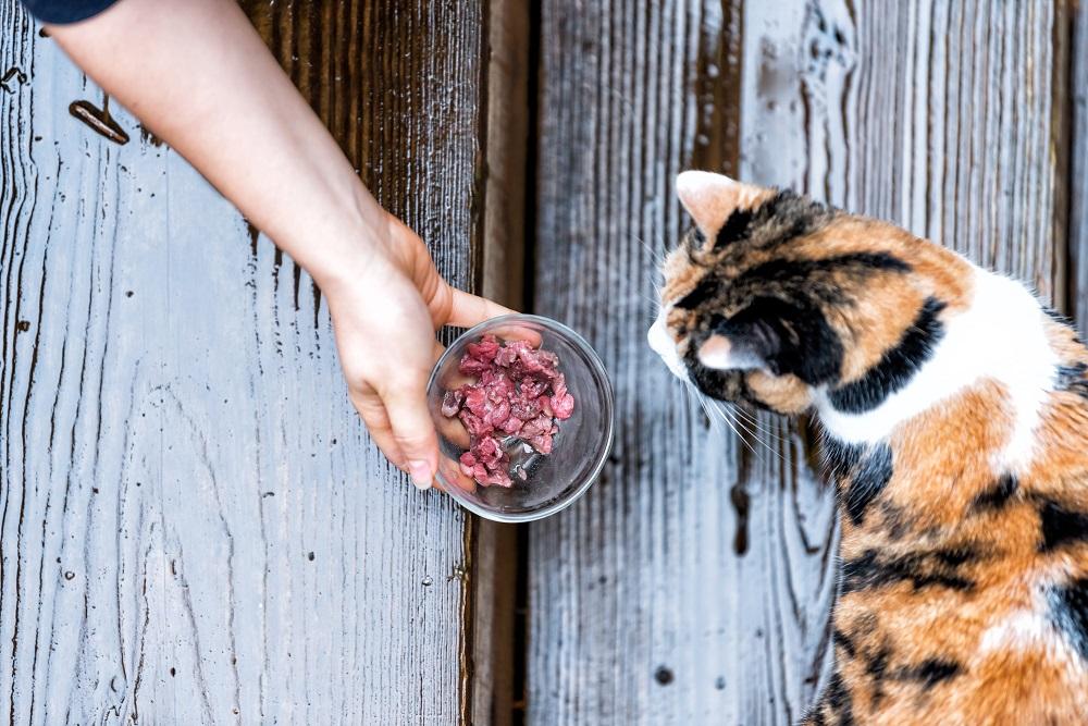 feeding an outdoor cat