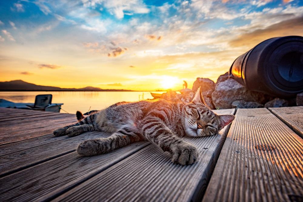 warm outdoor cat