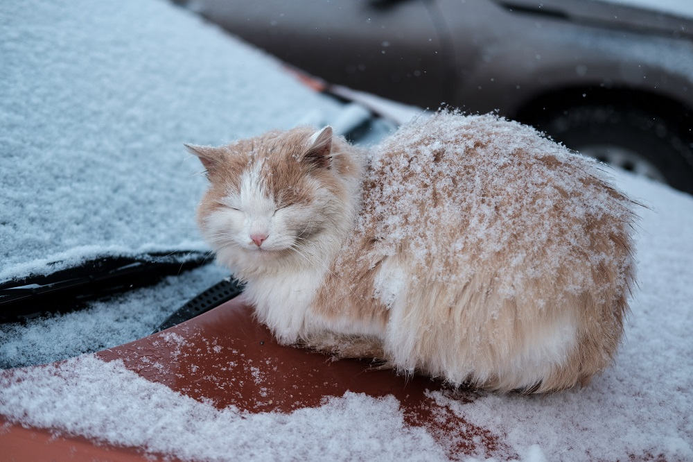 homeless cat trying to stay warm
