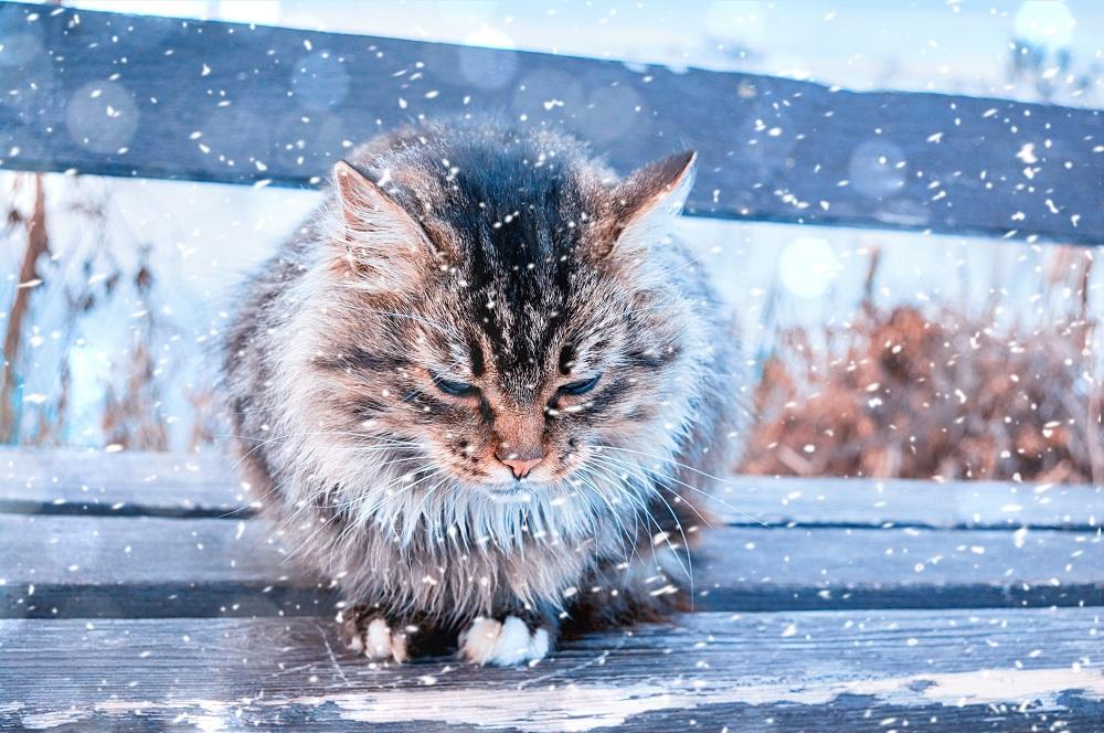 outdoor cat in winter
