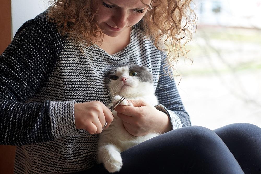 weekly cat grooming