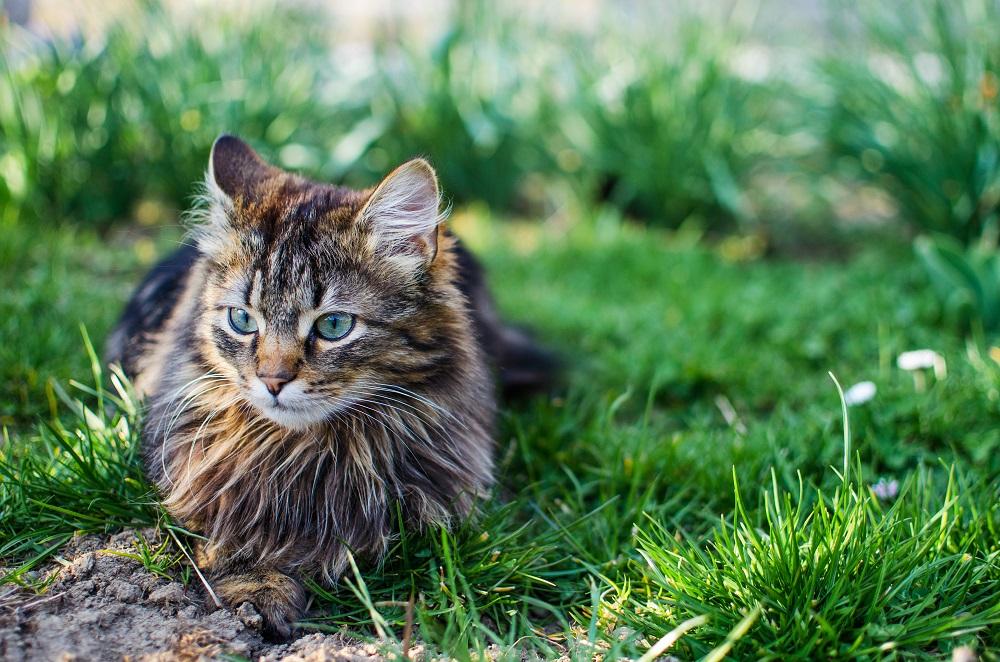 outdoor cat in yard