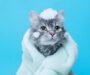 How to Bathe a Cat Safely