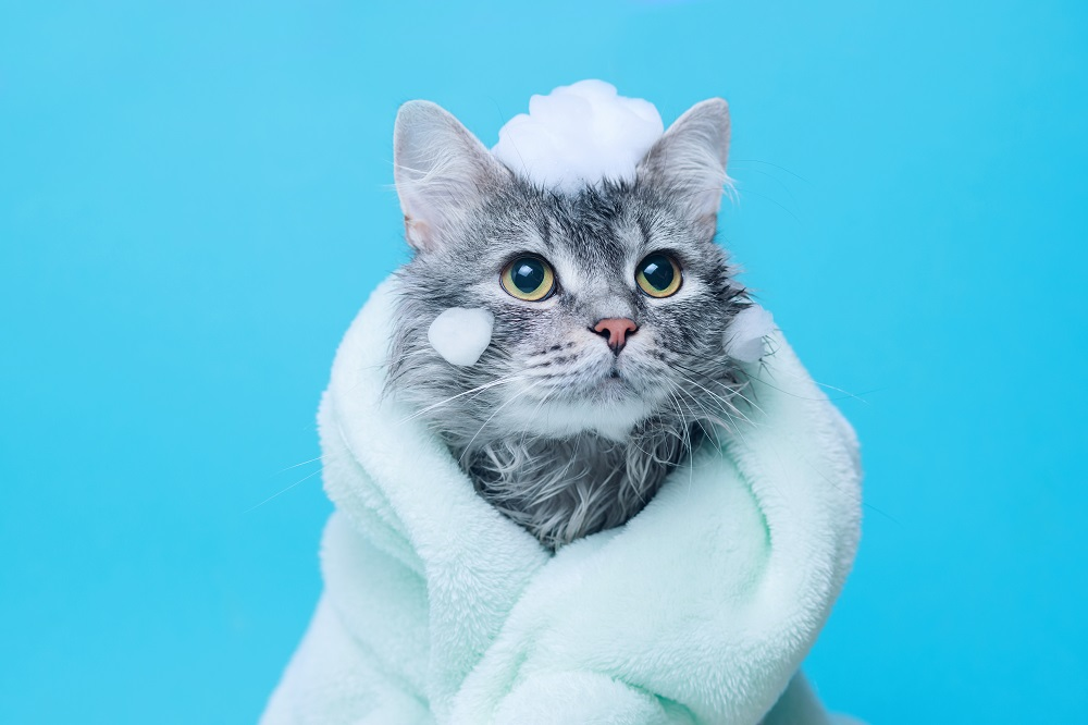 gray cat done with shower