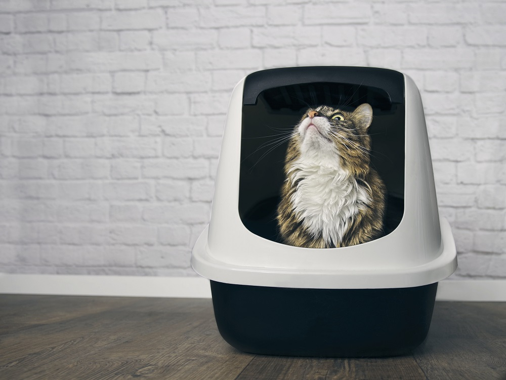 cat pooping in a litter box