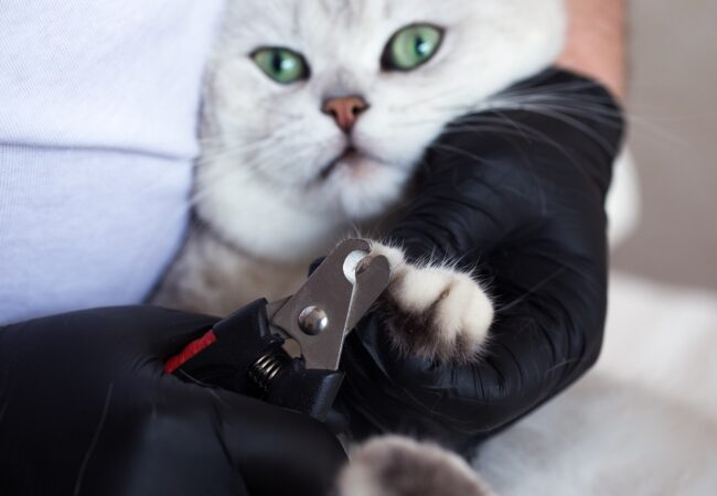 Clip Cat Nails: A Fast & Easy Process for Fearful Cats