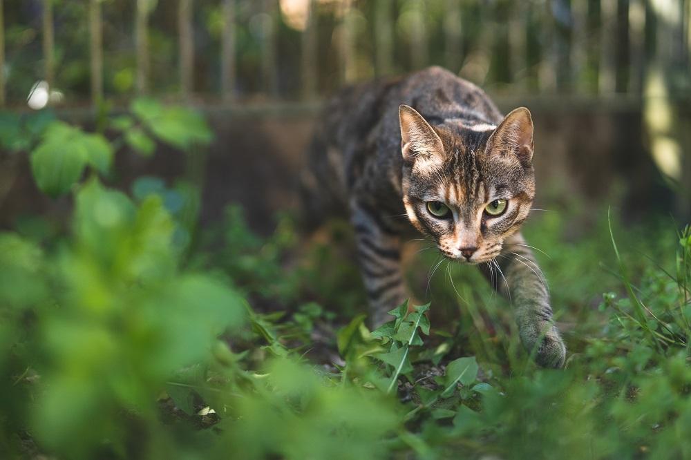 cat sneaking to enter yard